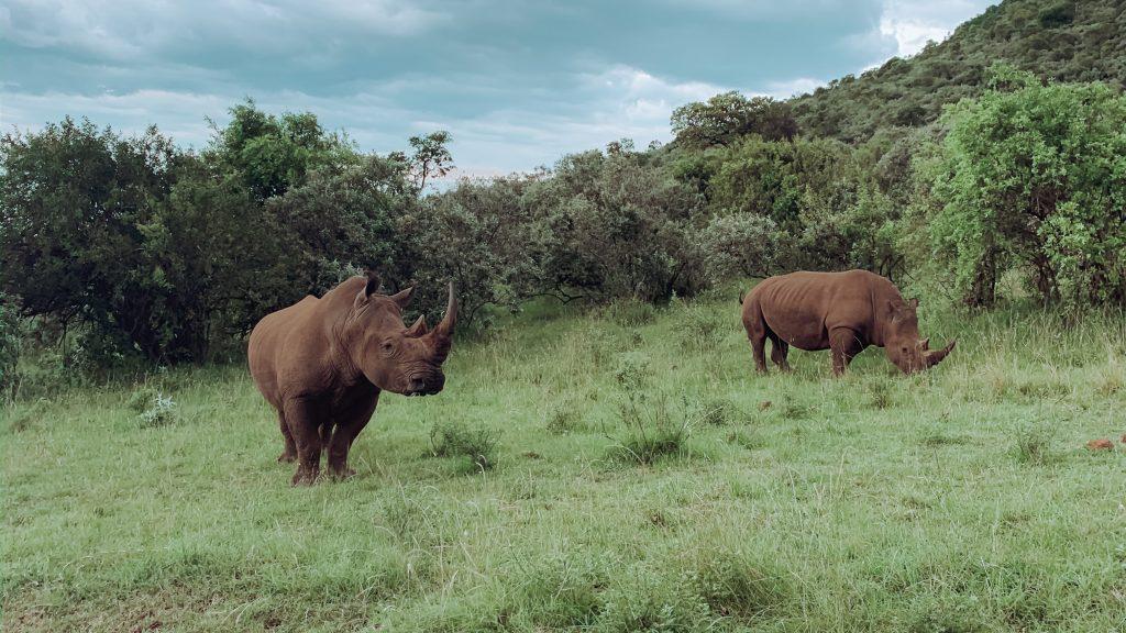 safari maleta