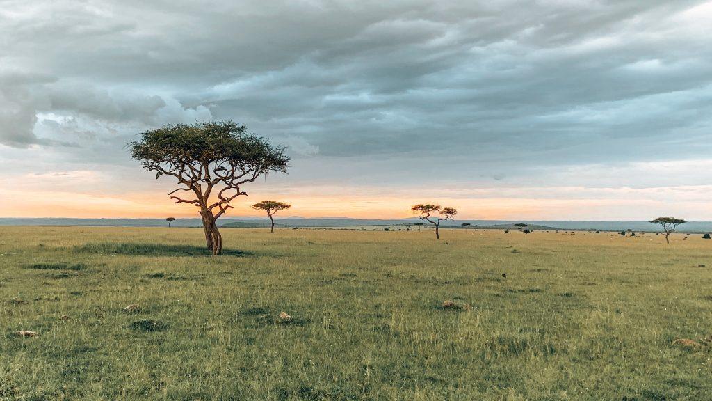 maleta de safari
