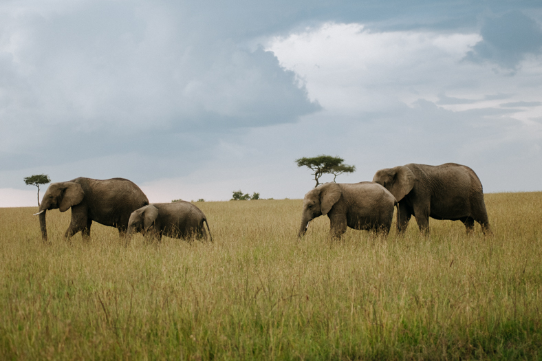 elegir el safari perfecto